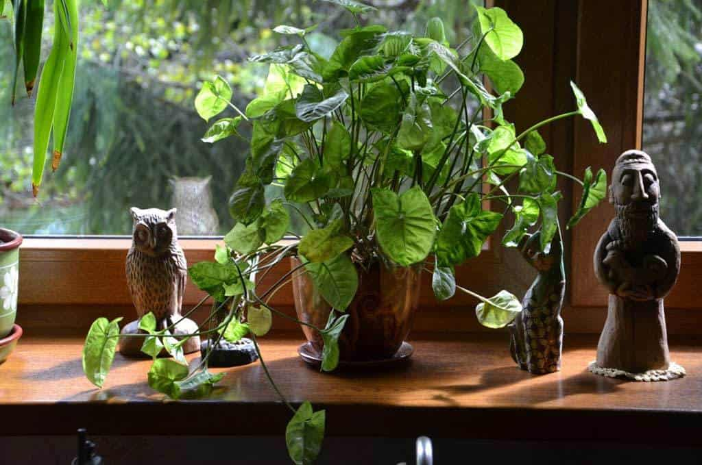 Indoor plants, not for your aquarium