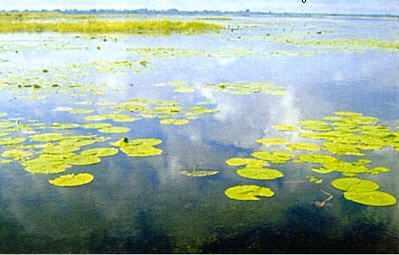 Vegetation in Lake Nawampasa