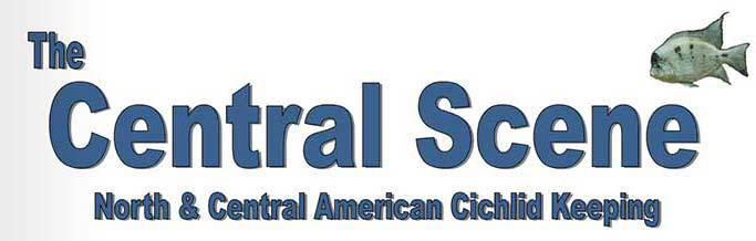 The Central Scene – North & Central American Cichlid Keeping