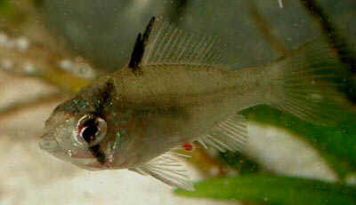 Close-up of a 1 month old juvenile.