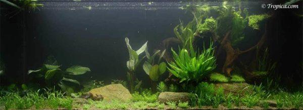 Jungle style - 300 liter