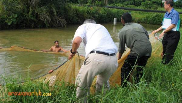 Hauling the net partially out of the pond