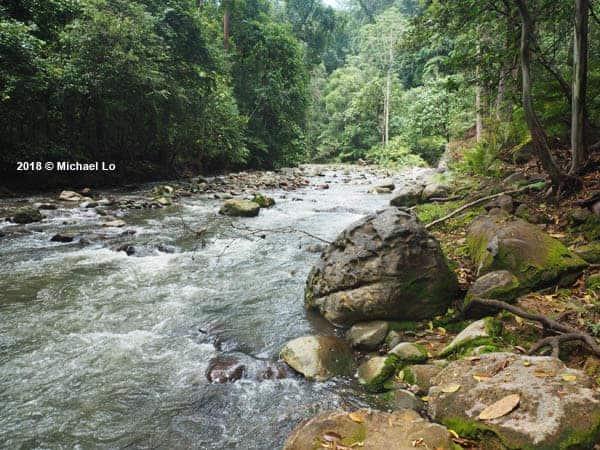 Betta ocellata habitat - Sabah - North Borneo