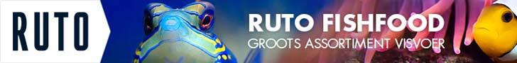 Ruto banner - leaderboard